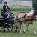Pferd und Fahren Donau-Ries e.V.